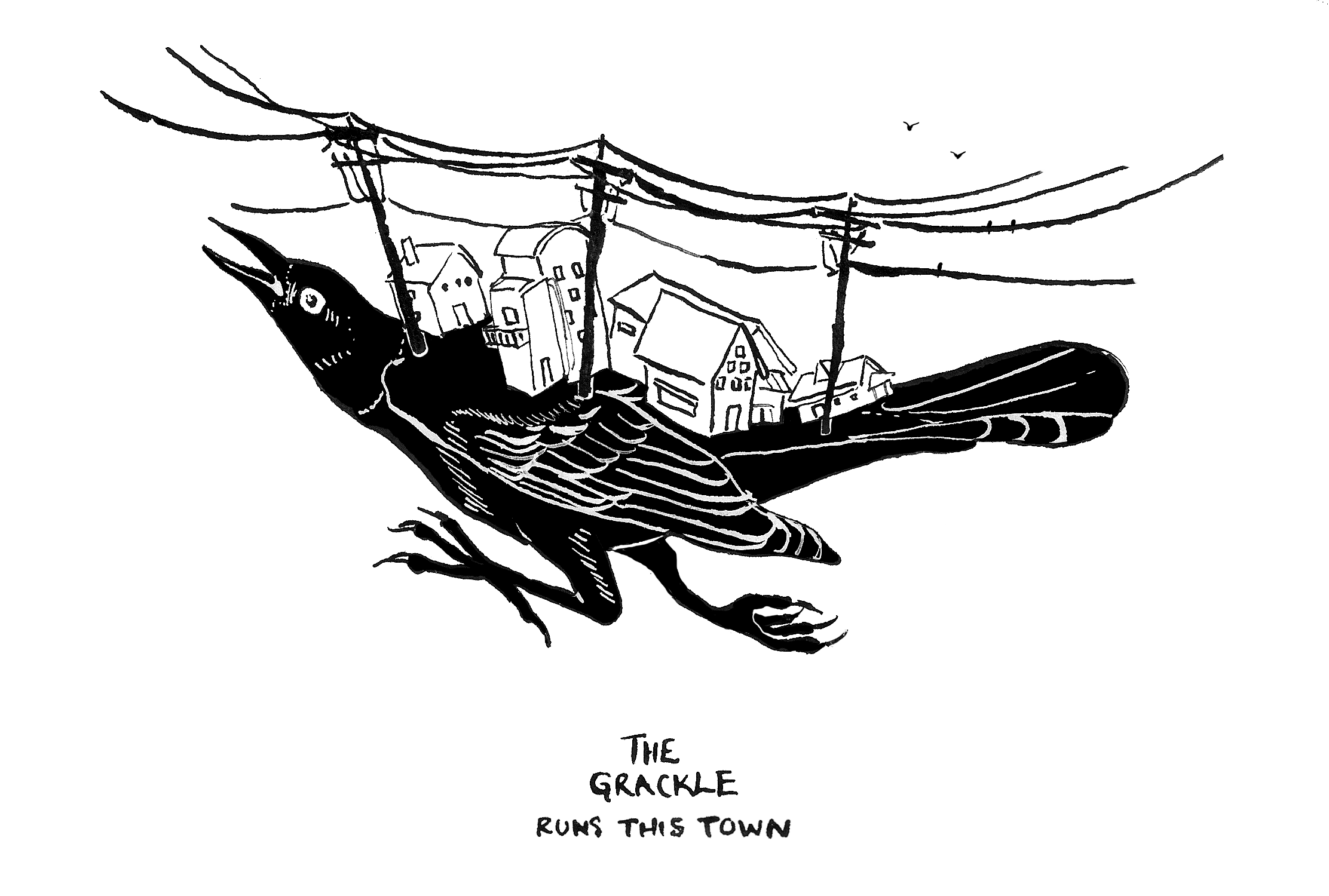 Eva - The Grackle Runs This Town - nonformat