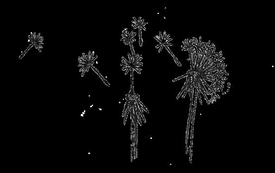 Eva-dandelion
